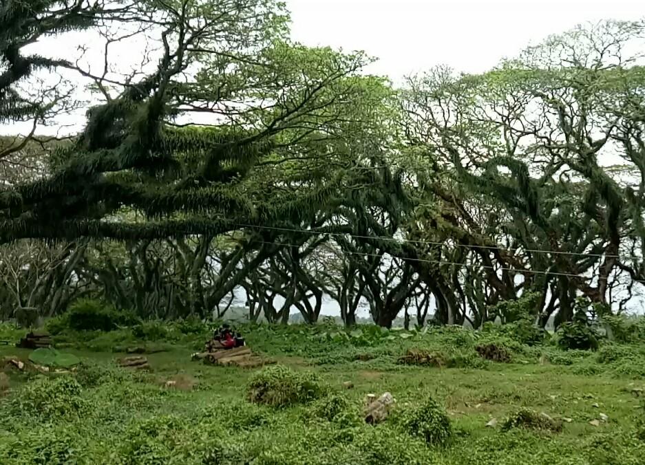 Eksplorasi Wisata Hutan yang Mirip Lokasi Film Lord of the Rings di Banyuwangi