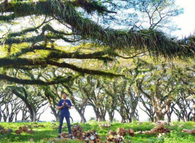Wisata ke Jawatan Benculuk Banyuwangi, Hutan Kece ala Alice in Wonderland
