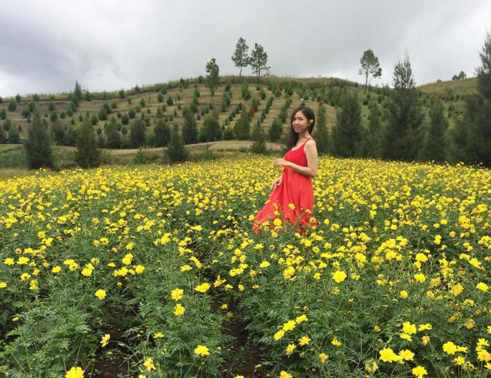 Liburan Cantik ke Sapo Juma Sumut yang Saingi Taman Bunga Belanda