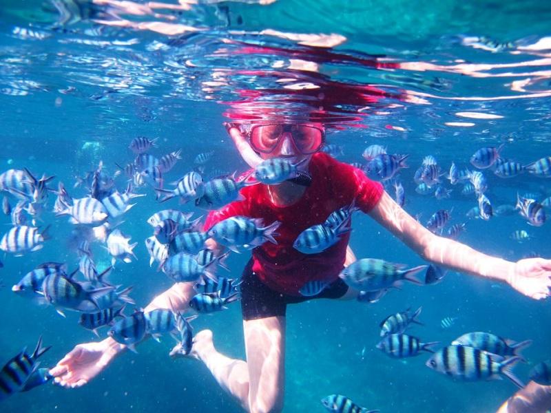 5 Destinasi Wisata Bawah Laut di Pulau Jawa dengan Keindahan Bak Negeri Dongeng