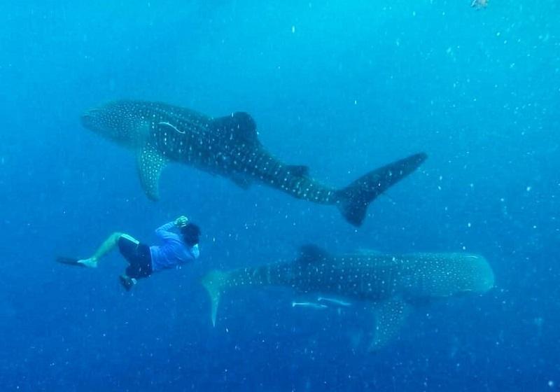 Berenang Bareng Hiu di Kepulauan Derawan, Maladewa-nya Indonesia