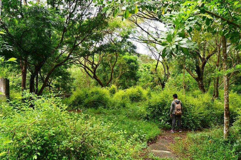 Asri dan Sejuk, 5 Hutan Kota di Indonesia Ini Cocok untuk Ngadem dan Piknik