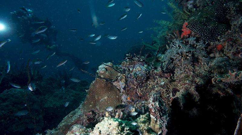 Nggak Perlu ke Bunaken, Kamu Bisa Menikmati Keindahan Bawah Laut di Pulau Pramuka