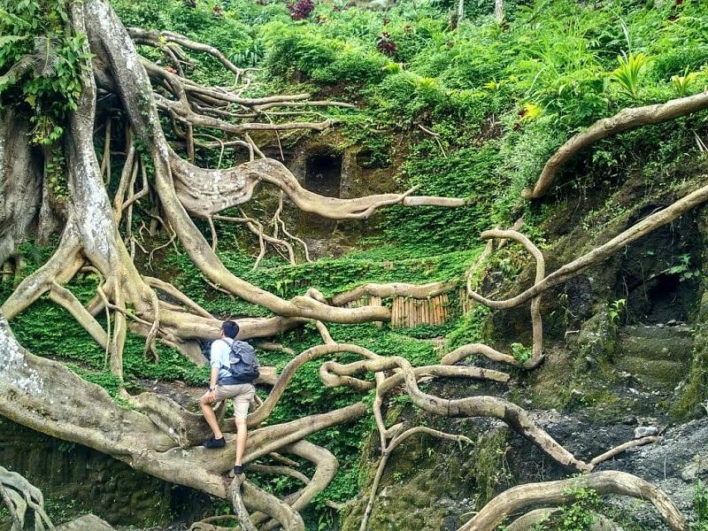 Nggak Selalu Pantai, Bali Juga Punya Wisata Hutan Rimba yang Instagrammable di Munduk Asri
