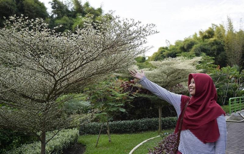 Cuaca Panas, Kamu Bisa Ngadem di 5 Taman Keren yang Ada di Surabaya Ini